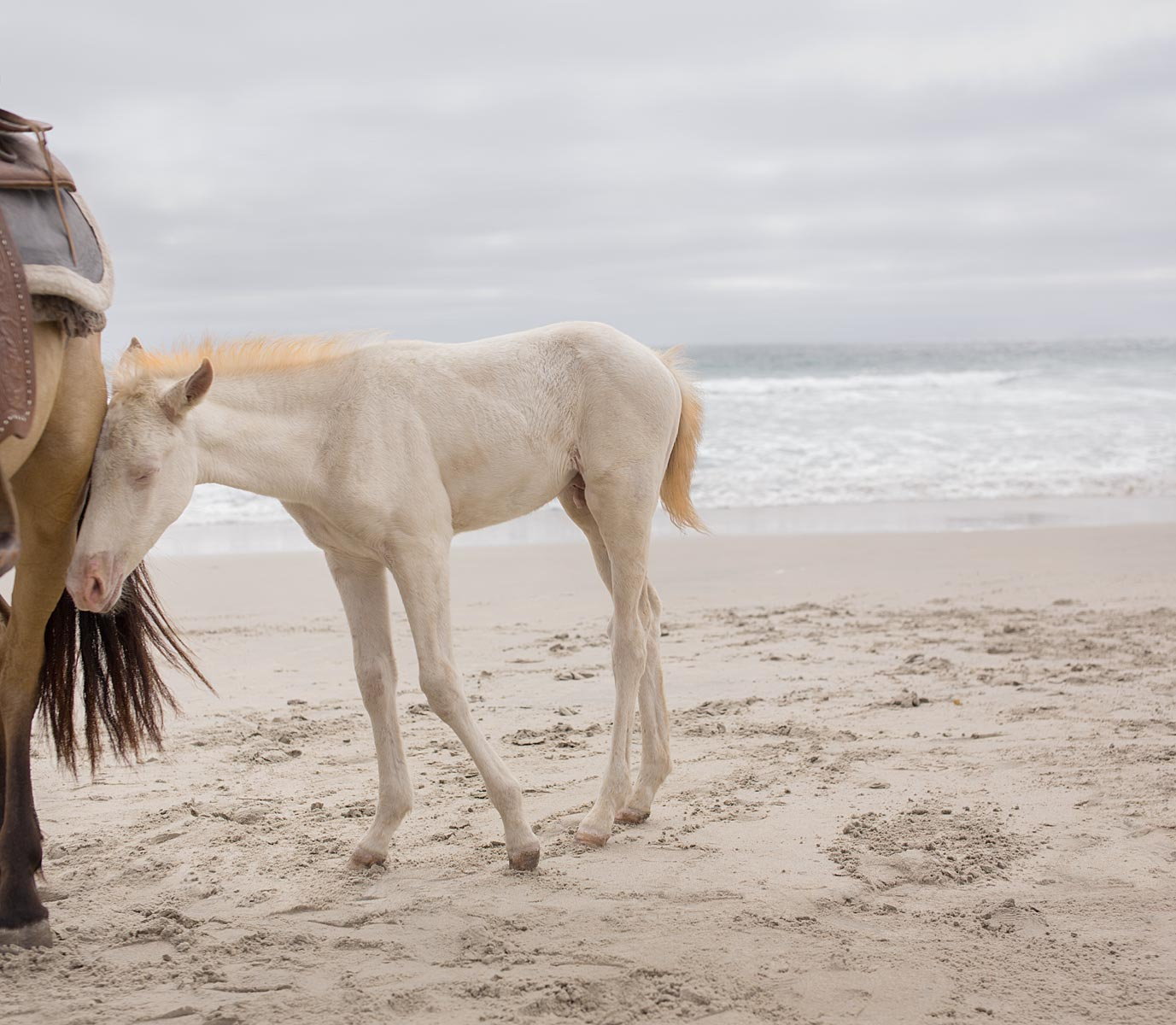 HorseBeachMother2